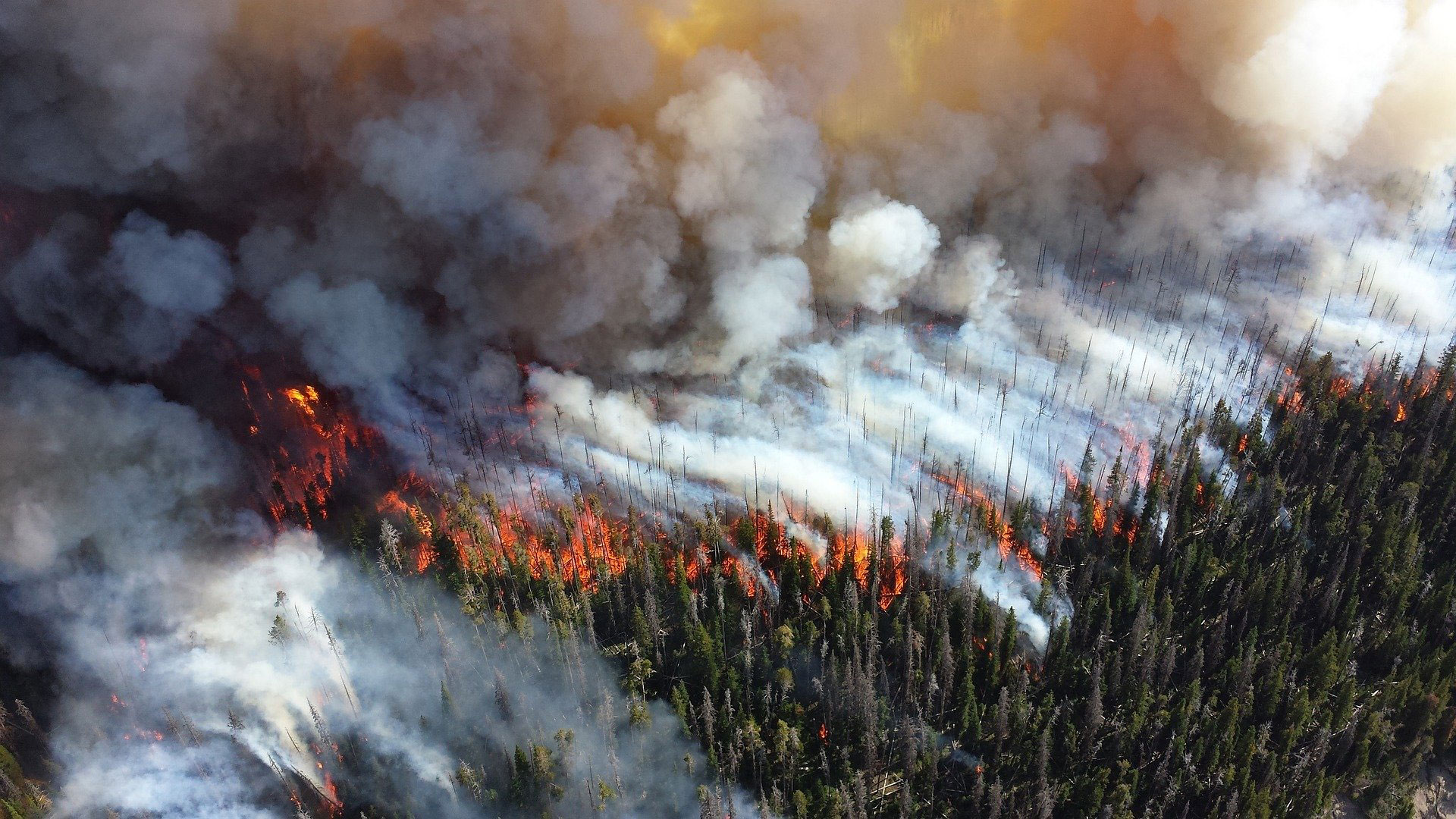 Thinking Differently About How YOU Can Prevent Forest Fires!