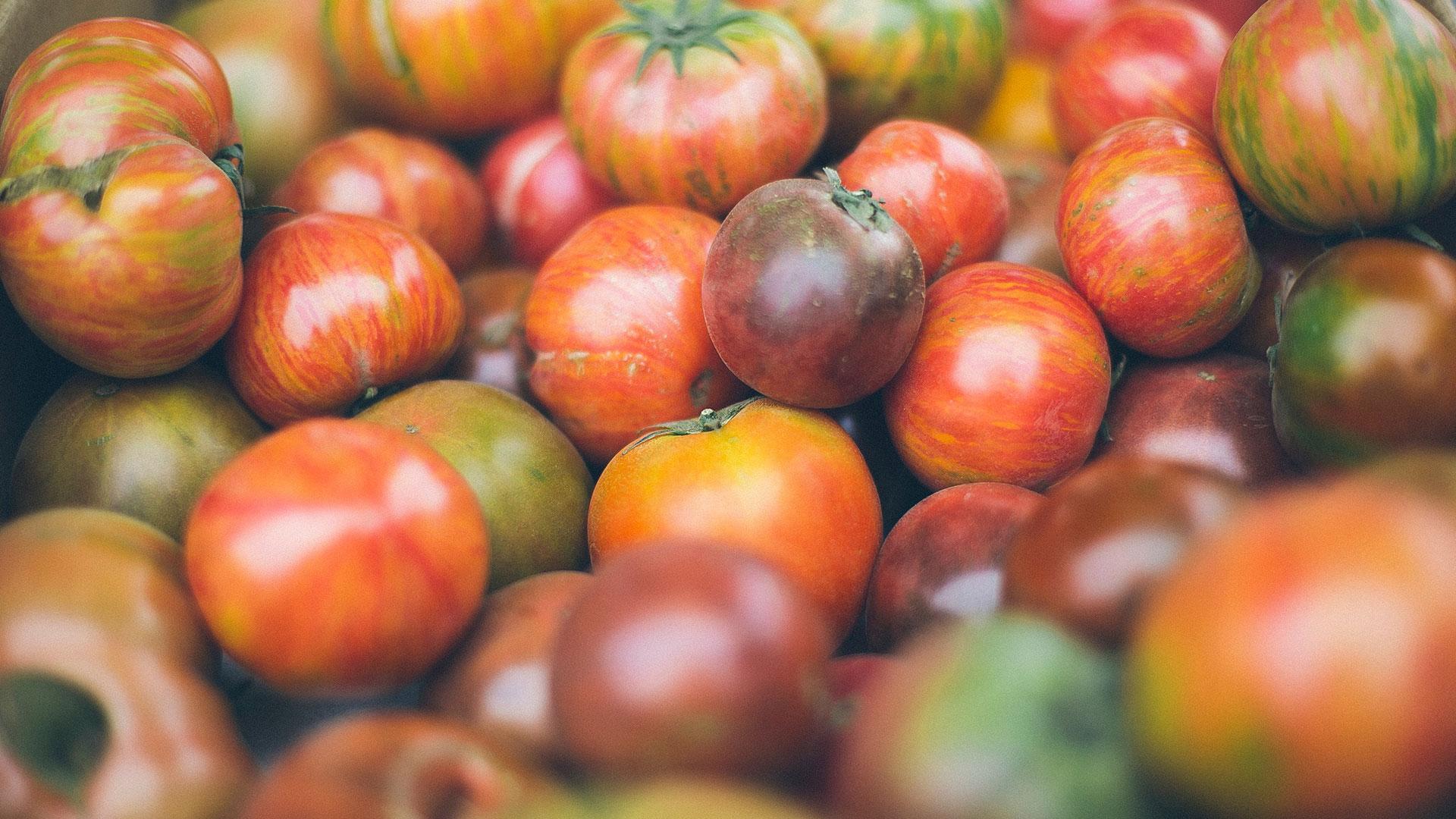 Support local farmers in Colorado