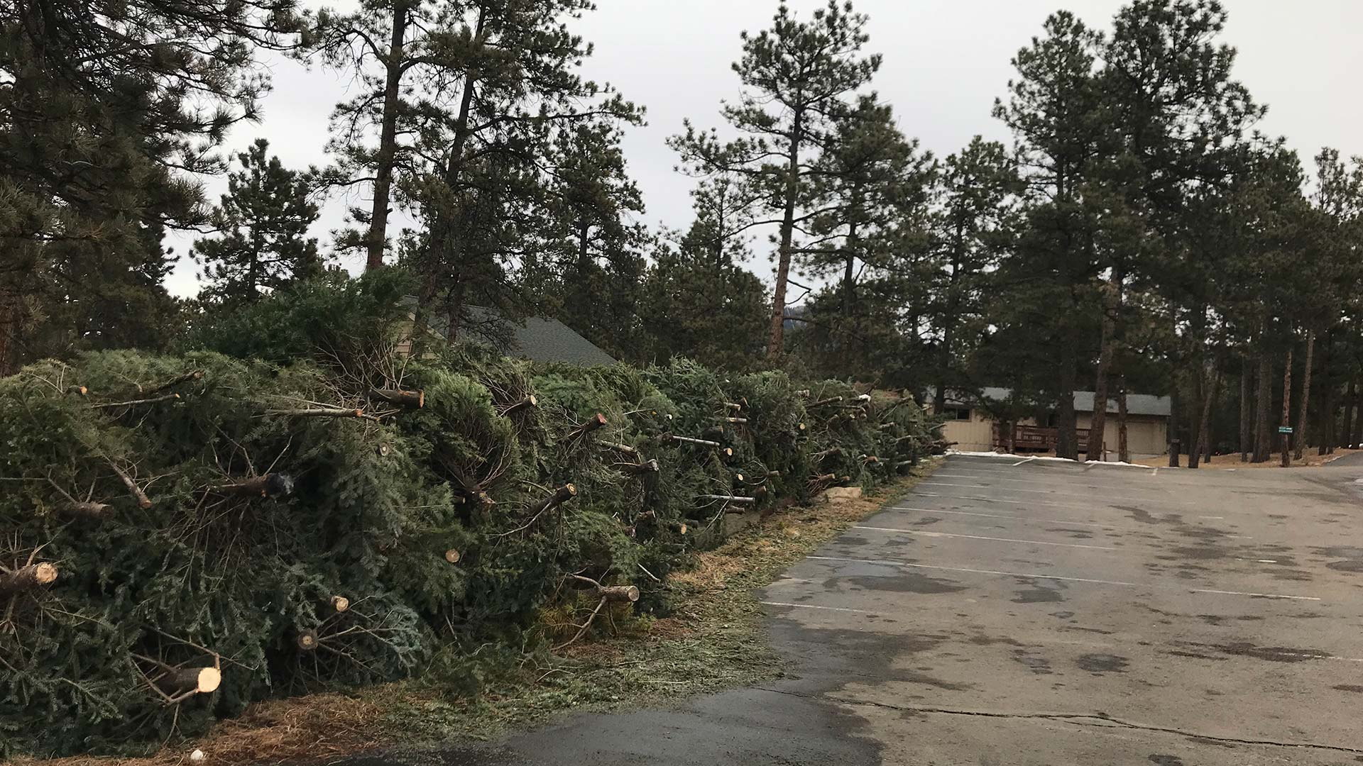 Annual Holiday Tree Recycling Days
